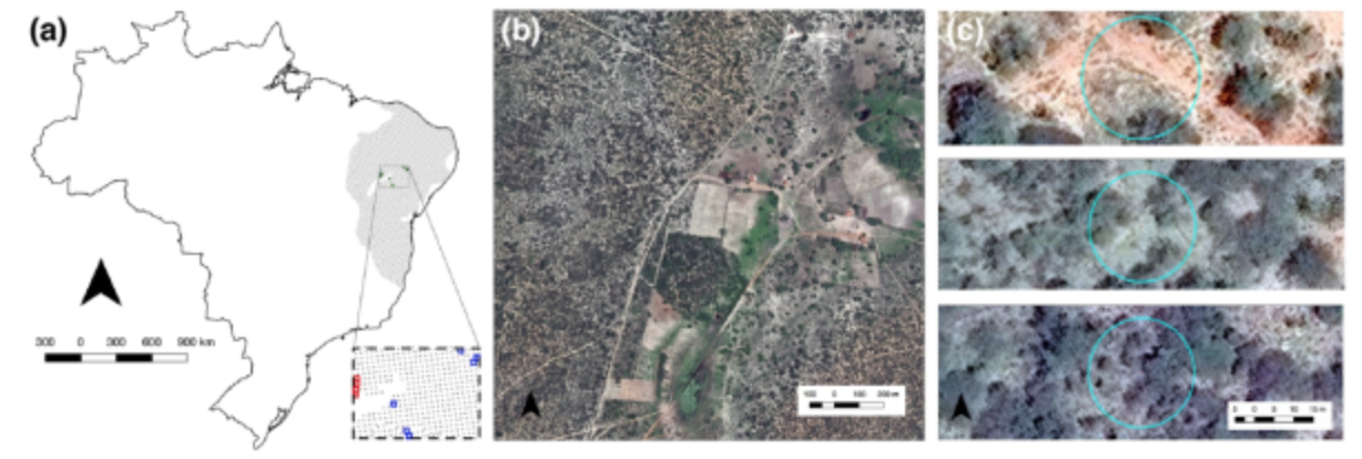 High Spatial Resolution Visual Band Imagery Outperforms Medium Resolution Spectral Imagery for Ecosystem Assessment in the Semi-Arid Brazilian Sertão