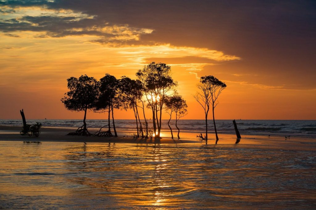 news_mangroves-sunset.jpg